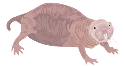 ratatopo.com